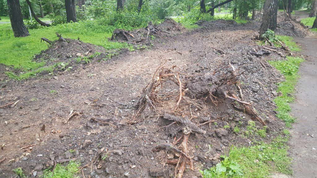 Вывороченные и оторванные корни деревьев - последствия работ по разбивке лишь одной из дорожек.