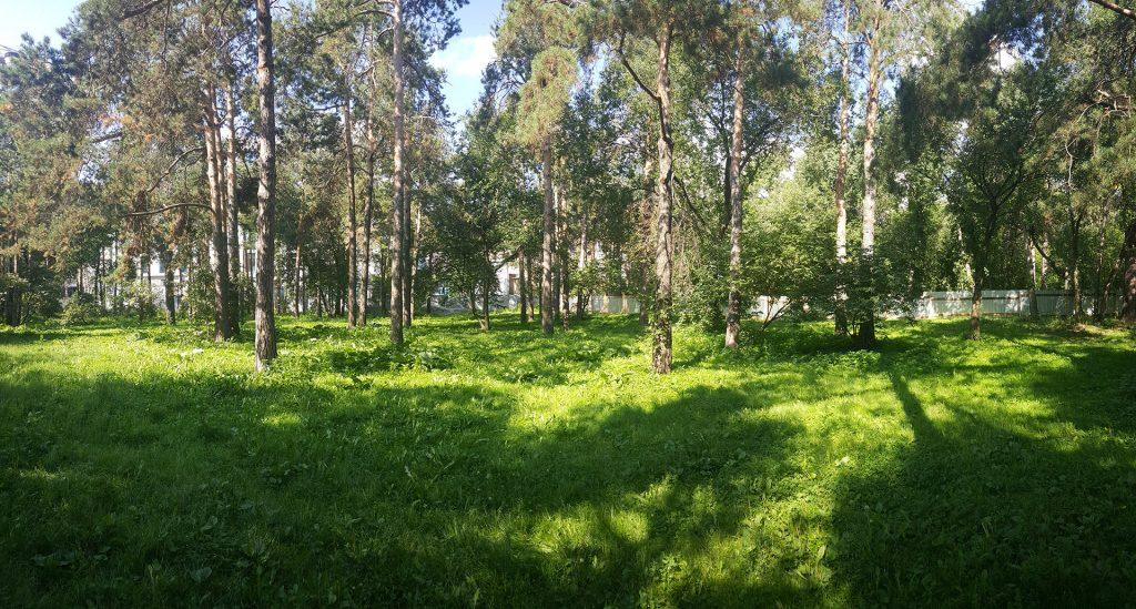 Место, где предполагается сделать площадку рядом с клиникой УГМК сейчас представляет собой лес.