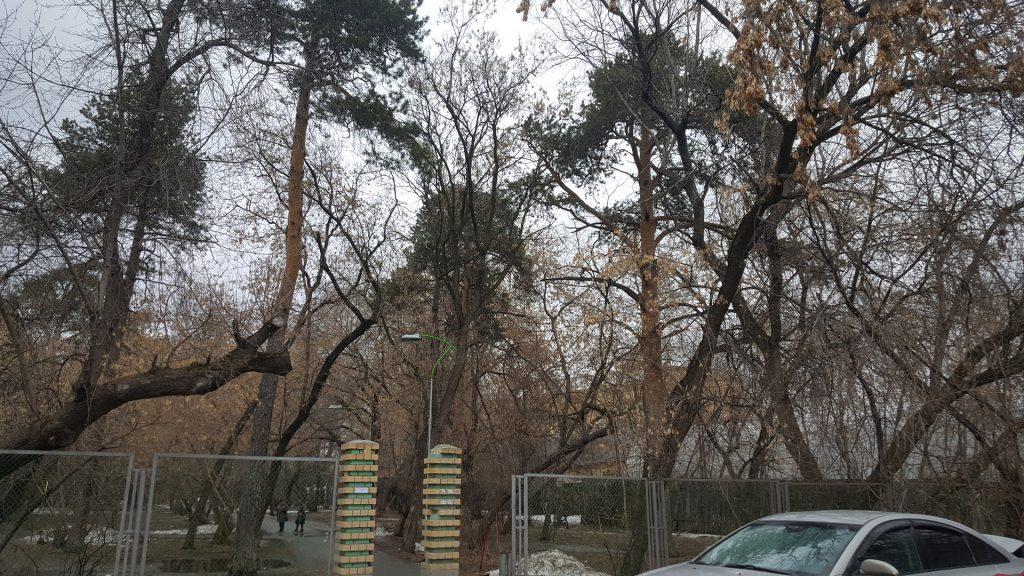 На участке, где предполагается устройство входной площадки со стороны института кардиологии, плотно растут деревья.