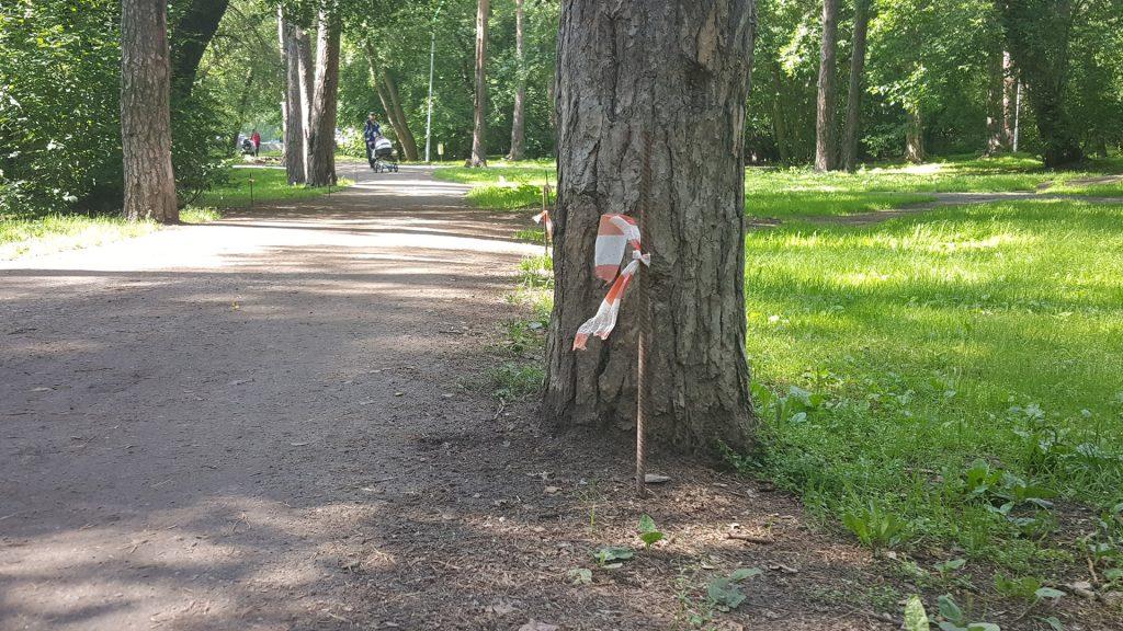 По разметке дорожек, которую выполнял подрядчик, было видно, что они слишком широкие и заденут деревья.