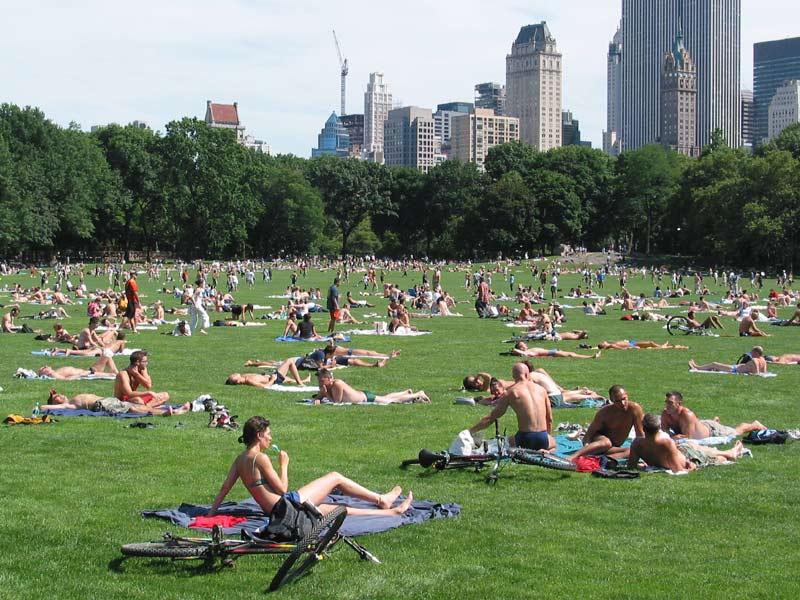 Большой газон в Централ-парке в Нью-Йорке